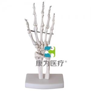"""""""康为医疗""""自然大手骨模型"""