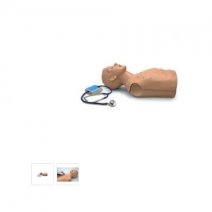 德国3B Scientific®成人心肺音躯干模型